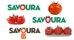 Savora Tomates ou Canabis