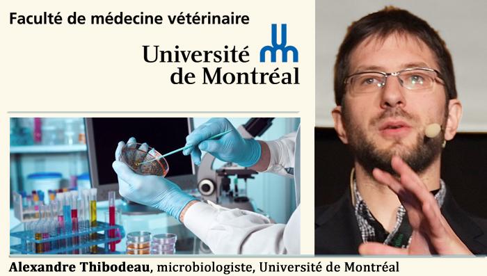 Alexandre Thibodeau, microbiologiste, Université de Montréal