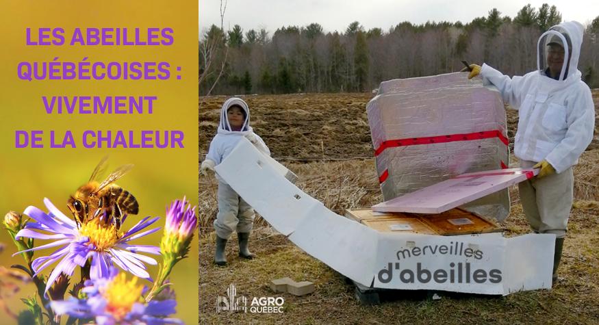 Abeilles québécoises